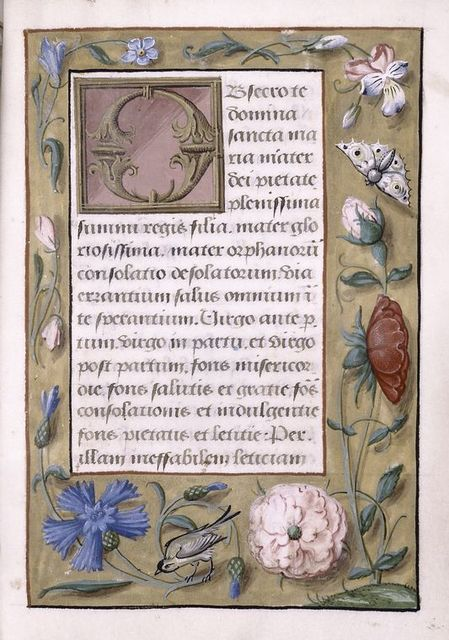 Different scribe or different script style; border of strewn flowers, insects, bird.