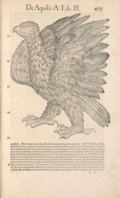 Aquila, page 163