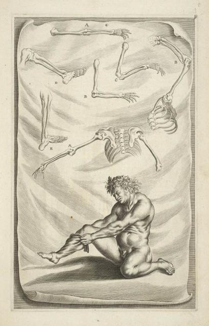 [Plate. Parts of skeleton, nude man pulling sock over leg.]