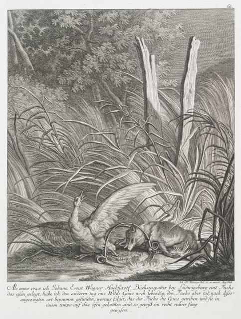 Als anno 1728 ich Johann Ernst Wagner Hochfürstl. Büchsenspaner bey Ludwigsburg eine Fuchs das eisen gelegt, habe ich den anderen tag eine Wilde Gans noch lebendig, den Fuchs aber tod, nach diser angezeigten art beysamen gefunden, woraus folget, das der Fuchs die Gans getriben und sie in einem tempo auf das eisen gekomen sind, so gewiss ein recht rahrer fang gewesen.