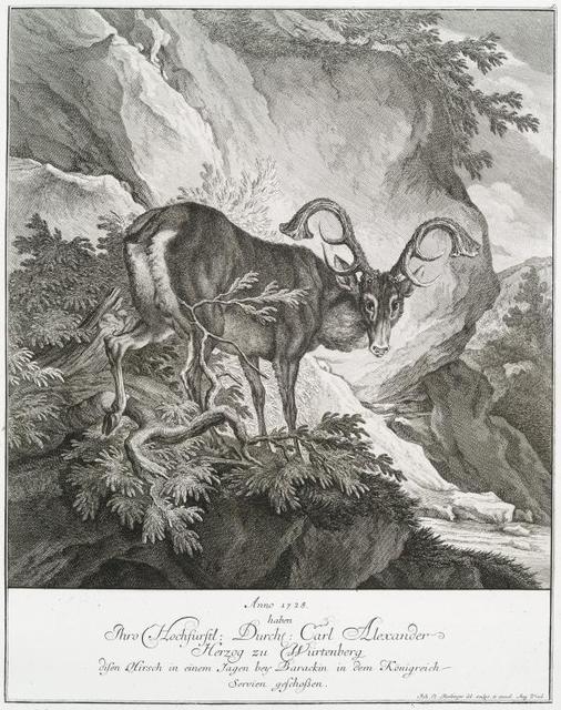 Anno 1728 haben Thro Hochfürstl. Durchl. Carl Alexander Herzog zu Würtenberg disen Hirsch in einem Jagen bey Barackin in dem Königreich Servien geschossen.