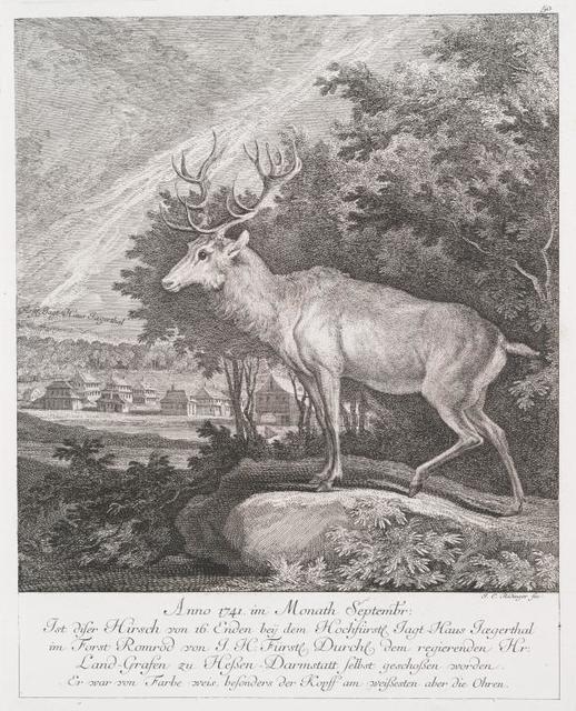 Anno 1741 im Monath Septembr. Ist diser Hirsch von 16 Enden bey dem Hochfürstl. Jagt-Haus Jœgerthal im Forst Romrod von J. H. Fürstl. Durchl. dem regierenden Hr. Land-Grafen zu Hessen-Darmstatt selbst geschossen worden. Er war von Farbe weis, besonders dere Kopff am weissesten aber die Ohren.