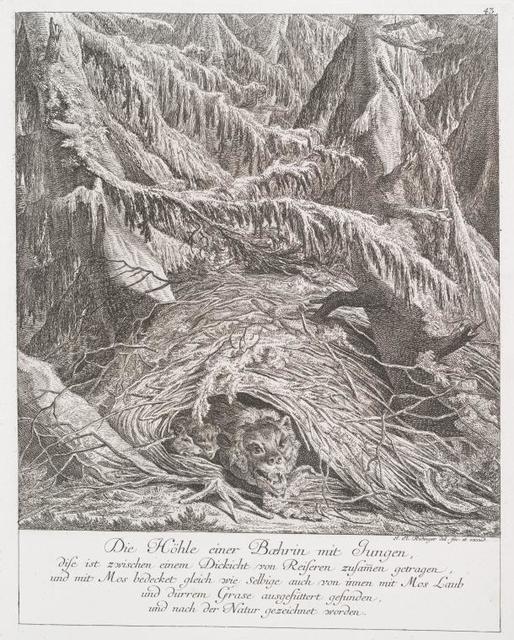 Die Höhle einer Boehrin mit Jungen, dise ist zweichen einem Dickicht von Reiseren zusamen getrangen, und mit Mos bedecket gleich wie selbige auch von innen mit Mos Laub und dürrem Grase ausgefüttert gefunden, und nach der Natur gezeichnet worden.