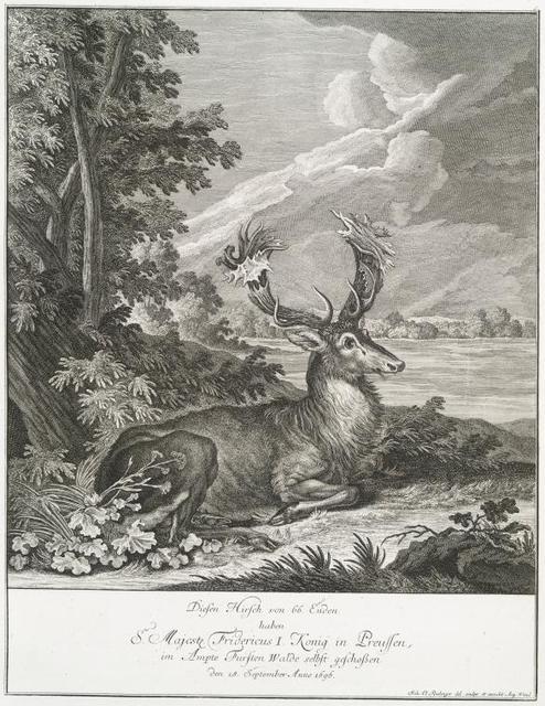 Diesen Hirsch von 66 Enden haben S. Majeste Fridericus I Konig in Preussen, im Ampte Fursten Walde selbst geschossen den 18 September Anno 1696.