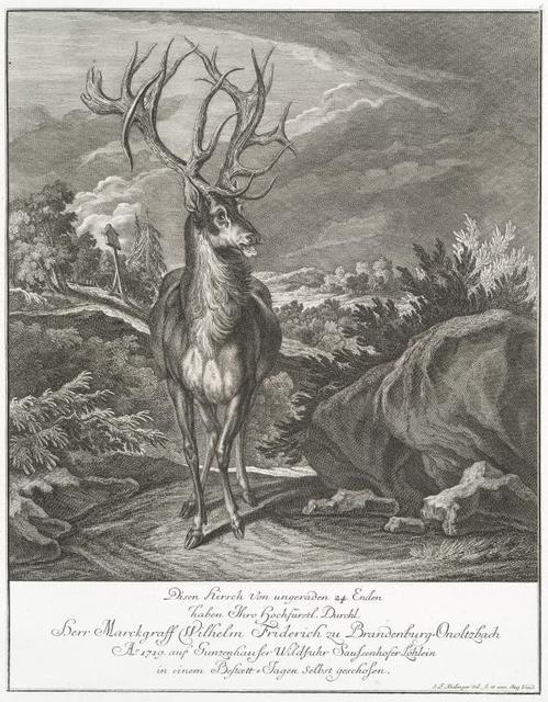 Diesen Hirsch von ungerarden 24 Enden haben Thro Hochfürstel. Durschl. Herr Marckgraff Wilhelm Friderich zu Brandenberg-Onoltzbach Ao. 1719 auf Gunzenhauser Wildfuhr Saussenhofer Löhlein in einem Bestoett-Tagen selbst geschosen.