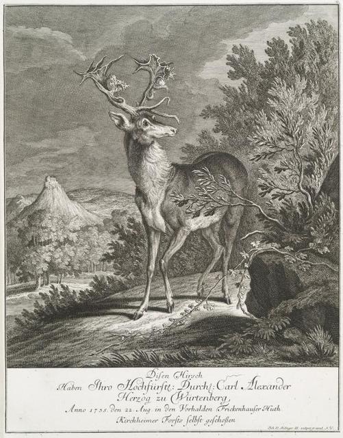 Disen Hirsch haben Thro Hochfürstl. Durchl. Carl Alexander Herzog zu Würtenberg, Anno 1735 den 22 Aug. in dem Vorhalden Frickenhausere Huth. Kirchheimer Forsts selbst geschossen.