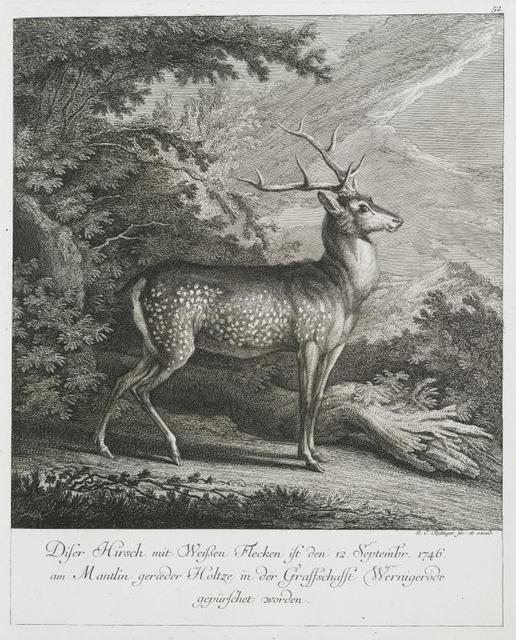 Diser Hirsch mit weissen Flecken ist den 12 Septembr. 1746 am Mantlin gerœder Holtze in der Graffschafft Wernigerode gepürschet worden.