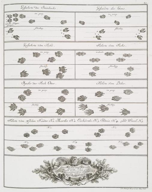 Gefoehrte des Steinbocks; Gefoehrte des Gems; Gefoehrte vom Tachs; Goehrte vom Fuchs; Spuhr der Fisch Otter; Foehrte vom Biber; Foehrte vom wilden Kuder, N. 1, Marder,  N. 2,  Eichörnle, N. 3, Iltnis, N. 4, und Wiesel, N. 5.