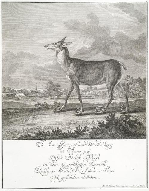 In dem Herzogthum Würtemberg ist Anno 1736. Dises Stuck wild in dem so genanten Stereich Reidemer huth, Kirch-heimer Forsts Tod gefunden Worden.