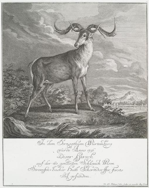 In dem Herzogthum Würtemberg wurde Anno 1736 diser Hirsch auf der so genantum Schlauch Wisen Stremfen-bacher huth Schorndorffer Forsts Tod gefunden.