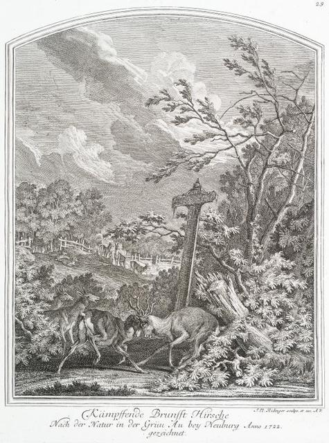 Kämpffende Brunfft Hirsche Nach der Natur in der Grün Au bey Neuburg Anno 1722 gezeichnet.