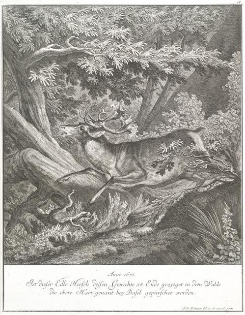 Anno 1675. Ist dieser Elde Hirsch dessen Gewichte 58. Ende gezeiget in dem Walde die obere Hart genant bey Basel gepürschet worden.