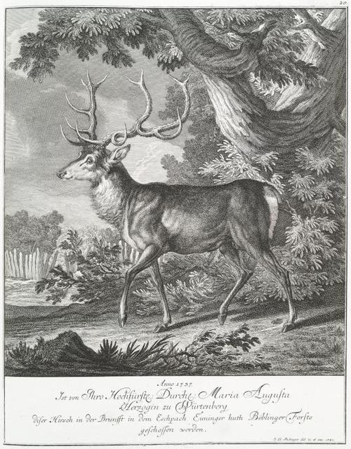 Anno 1737. Ist von Thro Hochfürstl. Durchl. Maria Augusta Herzogin zu Würtenburg diser Hirsch in der Brunfft in dem Eschpach Euninger huth Böblinger Forsts geschossen worden.