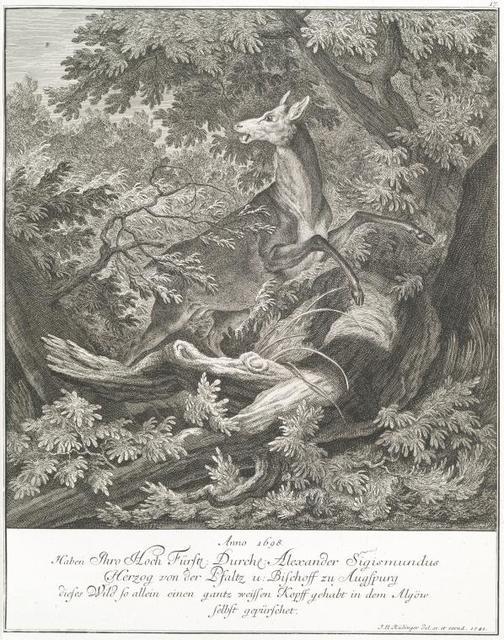 Anno 1768 haben Thro Hoch Fürstl. Durchl. Alexander Sigismundus Herezog von der Pfaltz u. Bischoff zu Augspurg dieses Wild so allein einen fantz weissen Kopff gehabt in dem Algöw selbst gepürschet.