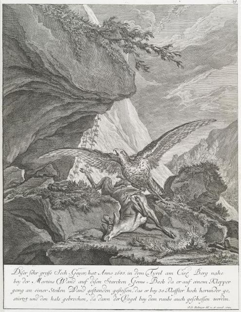 Diser sehr grosse Joch-Geyer, hat Anno 1685 in dem Tyrol am Cirl Berg nahe bey der Martins Wand auf disen Starcken Gems-Bock da er auf einem Klepper gang an einer Steilen Wand gestanden gestossen, das er bey 30 Klauffter hoch herunder gestürtzt und den hals gebrochen, da dann der Vogel bey dem raube auch geschossen worden.