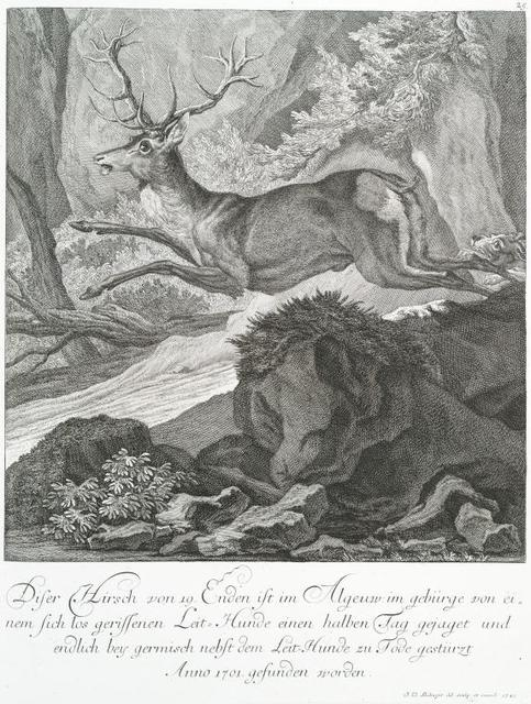 Diser Hirsch von 19 Enden ist im Algeuw. im gebürge von einem sich los gerissenen Leit-Hunde einen halben Tag [or Jag?] gejaget und endlich bey geremisch nebst dem Leit-Hunde zu Tode gestürzt, Anno 1701, gesunden worden.