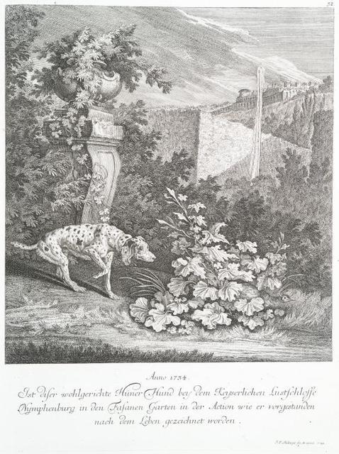 Anno 1734. Ist diser wohlgerichte Hüner Hund bey dem Keyserlichen Lustschlosse Nymphenburg in den Fasanen Garten in der Action wie ere vorgestanden nach dem Leben gezeichnet worden.