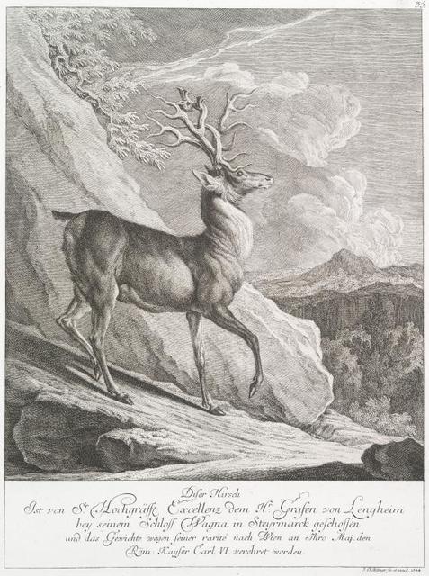 Diser Hirsch ist von Sr. Hochgräffl. Excellenz dem Hr. Grafen von Lengheim bey seinem Schloss Wagna in Steyrmarck geschossen und das Gewichte wegen seiner rarité nach Wien an Thro Maj. den Röm. Kayser Carl VI verehret worden.