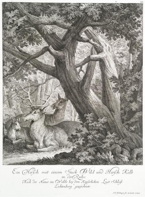 Ein Hirsch mit einem Stuck Wild und Hirsch Kalb in der Ruhe. Nach der Natur im Walde bey dem Kayserlichen Lust Schloss Lichtenberg gezeichnet.