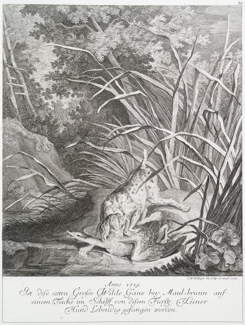 Anno 1719. Ist dis extra grosse wilde Gans bey Maul-brunn auf einem Teiche im Schliff von disem Fürstl. Hünere Hund lebendig gefangen worden.