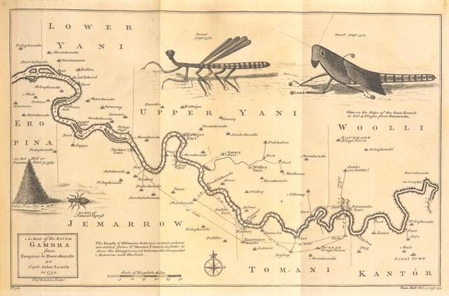 A map of the River Gambra from Eropina to Barrakunda; [Insects found on the River Gambra.]