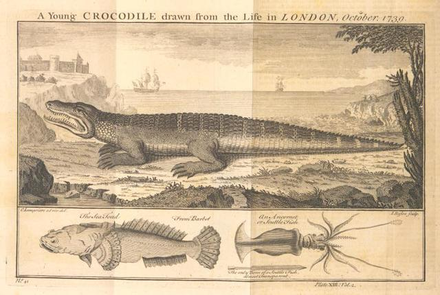 A young crocodile; The sea toad; An ancornet or scuttle fish.