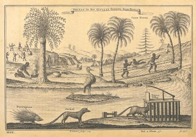 Bridge in the Quoja's country; Coco trees; Porcupine; Jackal; Tiger trap.