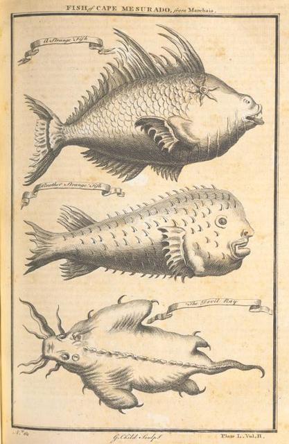 Fish of Cape Mesurado; A strange fish; The devil ray.