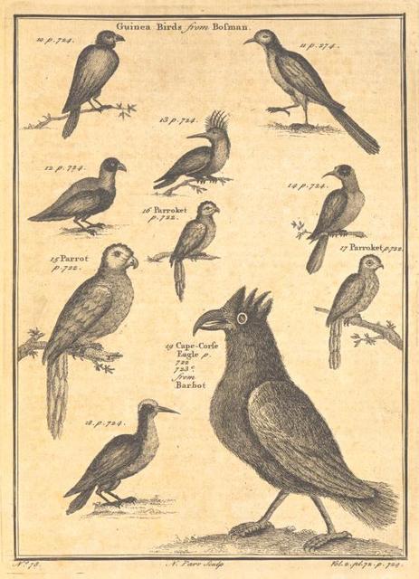 More birds found on the Guinea coast.