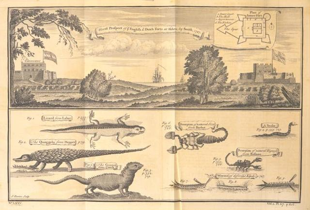 North prospect of the English & Dutch Forts at Akkra; [Beasts and insects on the coast of Guinea]; lizard; scorpion of natural size; snake; quoggelo; guano; scorpion of natural bigness; worms of different kinds.