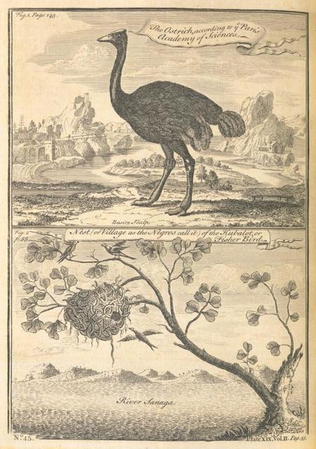 The ostrich, according to the Paris Academy of Science; Nest [or village as the Negroes call it] of the kubalot, or fisher bird.