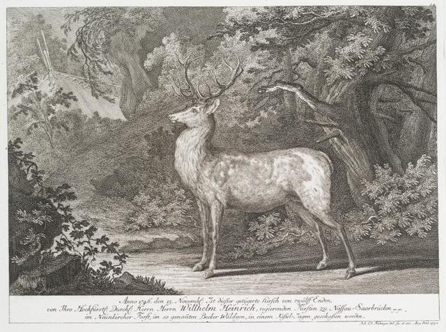 Anno 1746 den 15 Novembl. Ist diesser getygerte Hirsch von zwölff Enden, von Thro Hochfürstl. Durschl. Herrn Wilhelm Heinrich, regierenden Fürsten zu Nassau-Saarbrücken im Neünkircher Forst, im so genanten Becker Wäldgen, in einem Kessel-Jagen geschossen worden.