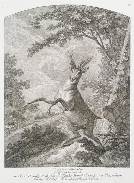 Ao. 1750 d. 22 Septembris ist diser schöne Hirsch von Sr. Hochgrœftl. Excell. dem H. Reichs Marschall Grafen von Pappenheim über dem Matzhofer Forst selbst geschossen worden.