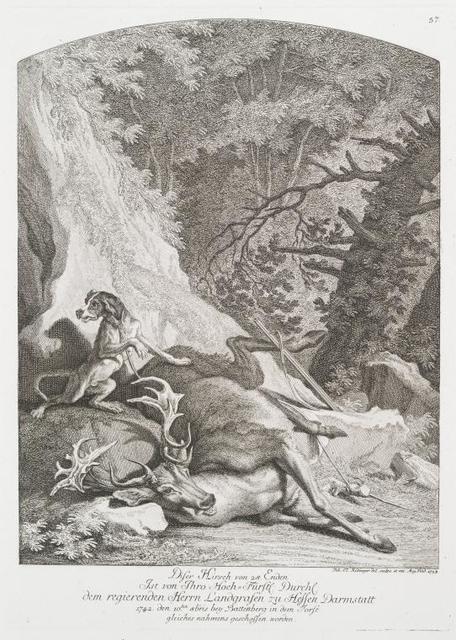 Diser Hirsch von 28 Enden ist von Thro Hoch-Fürstl. Druchl. Dem regierenden Herrn Landgrafen zu Hessen Darmstatt 1742 den 10ten 8 bris bey Battenberg in dedm Forst gleiches nahmens geschossen worden.