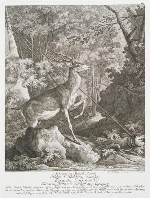 Anno 1700 im Monath Augusti Haben Sr. Hochfürstl. Durchl. Alexander Sigismundus Herzog zu Pfaltz und Bischoff zu Augspurg disen Hirsch lebendig gefangen dessen Farbe war an Kopf hals Leib und Lœuffen war die helffte weis und die andere schwartz und ist selbiger von dem Hn. Carl Willh. von Hamilton nach dem Leben gemahlet worden.