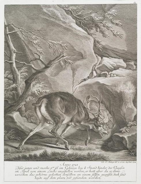 Anno 1718 diser junge und rasche 8ter ist im Gebürge bey ¾ Stund hinder der Clausen im Tyrol von einem Luchs angefallen worden, er hatt aber da er ihme zweischen das gehörne gekomen denselben an einem felsen gespisset, doch sind beyde auf dem platz tod gefunden worden.