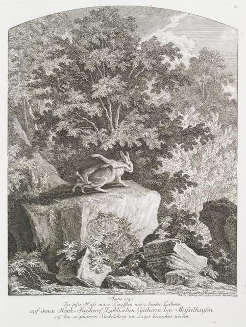 Anno 1741. Ist diser Hase mit 8 Loeufften und 2 hinder Leiberen auf denen Hoch-Freyherrl. Loblischen Gütheren bey Meisselhusen aauf dem so genanten Stickelsberg im Lager bekomen worden.