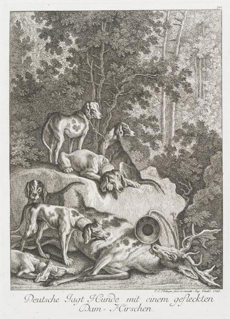 Deutsche Jagt Hunde mit einem gefleckten Dam-Hirschen.