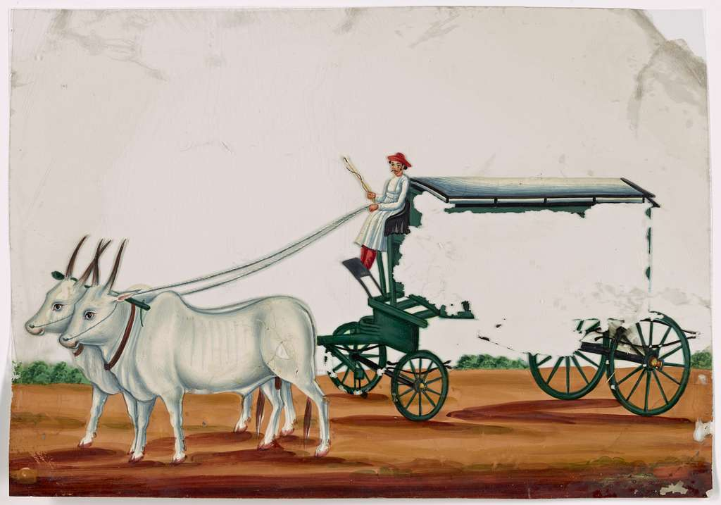 Green wagon pulled by two white oxen, driver in white robe