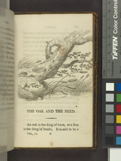 The oak and the reed.