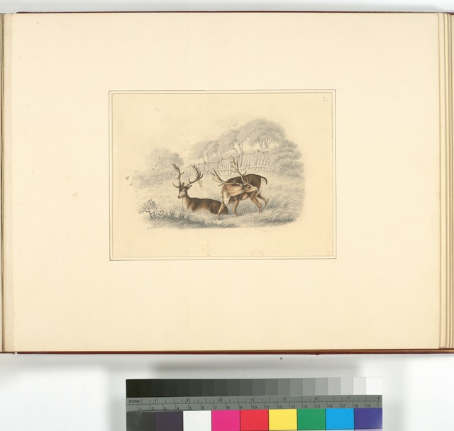 [Two deer, near a running fence.]