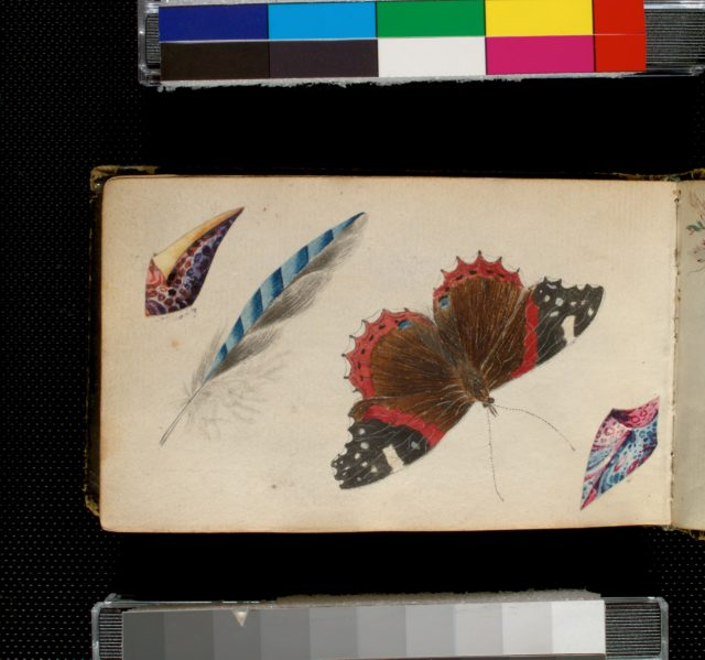 [Central image of butterfly flanked by collaged watercolor shells and feather in pencil and watercolor.]