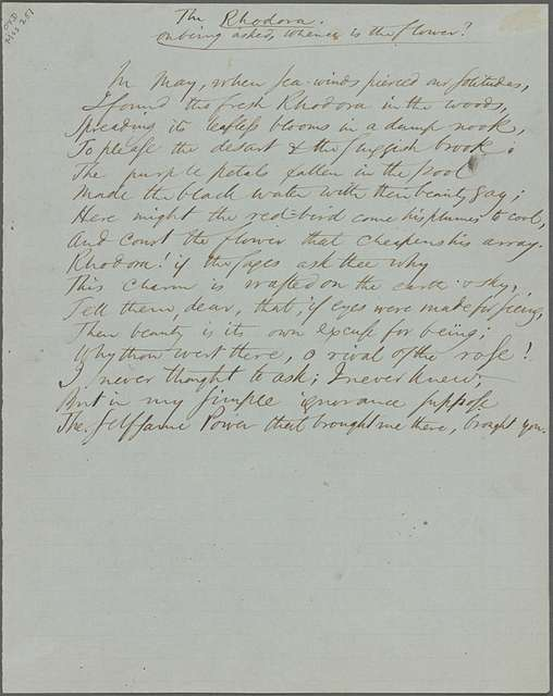 """""""The Rhodora."""" Holograph poem, unsigned, undated."""
