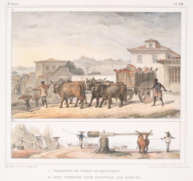 Transport de viande de boucherie; Joug tournant pour dompter des boeufs.