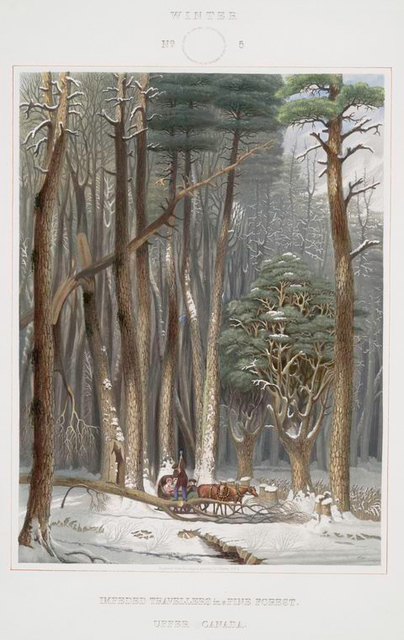 Winter.  Impeded travellers in a pine forest.  Upper Canada.