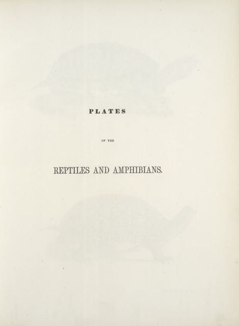 Part III  [Plates of the reptiles and amphibians]
