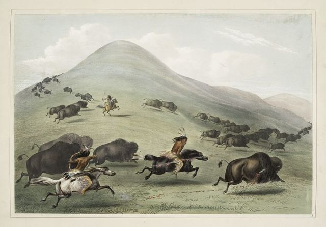 Buffalo hunt, chase.