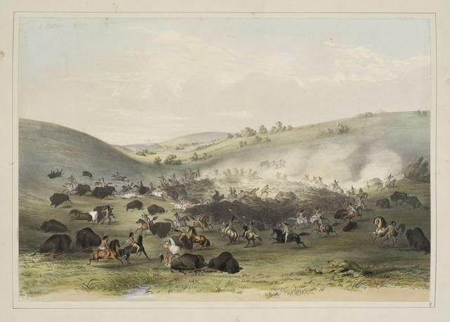 Buffalo hunt, surround.