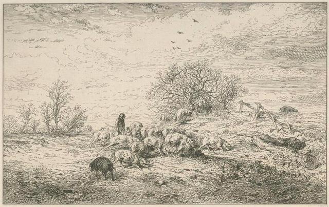 Paysage : troupeau de porcs.
