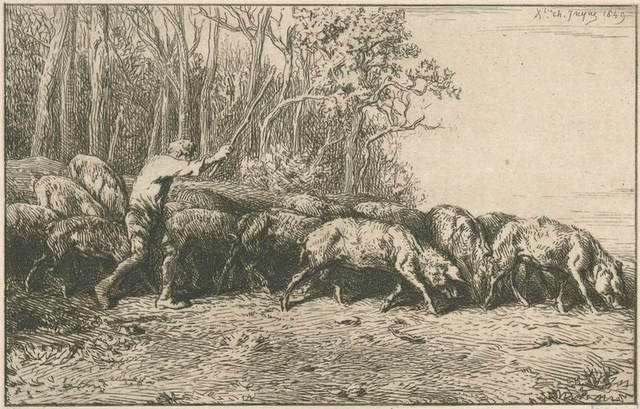 Troupeau de porcs sortant d'un bois.